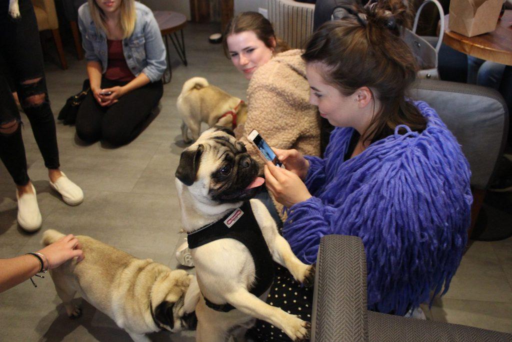 Pugs and pug lovers unite