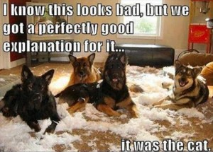 German Shepherd making mess