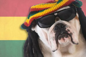 Just like humans, Dogs Love Chilling to Reggae too according to a Study